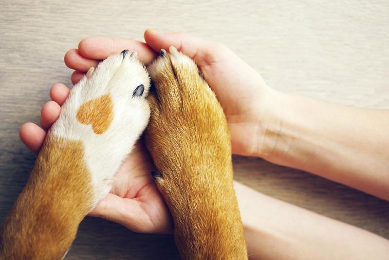 Podaj pomocną dłoń psu